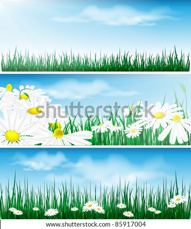 floral vector backgrounds with grass and flowers. Eps10 - stock vector