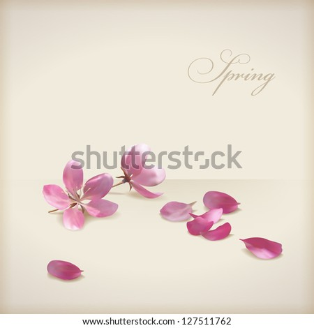 Floral vector cherry blossom flowers spring design. Pink flowers, freshly fallen petals and text 'Spring' on a beige background in modern style. Can be used as wedding, greeting or invitation card - stock vector