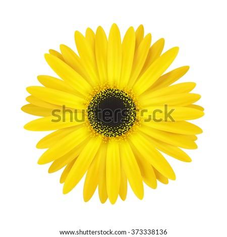 Flower bud isolated on white. Vector resizable illustration. - stock vector