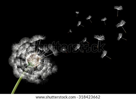 Flower dandelion on a black background - stock vector