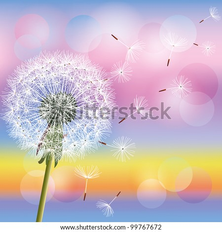 Flower dandelion on background of sunset, vector illustration. Spring nature wallpaper. Place for text