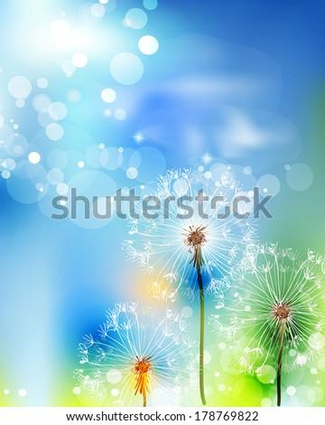 Flower dandelion on light blue. - stock vector