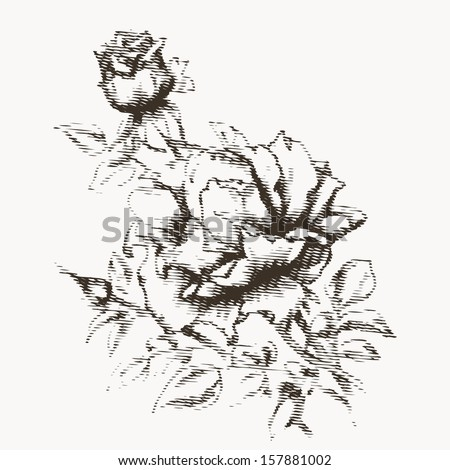 Flower engraving. Vintage rose in gravure style for you design and ckrapbooking