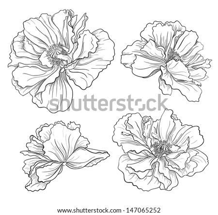 Flower hand drawn poppies - stock vector