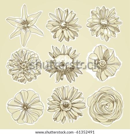 Flower Illustration - stock vector