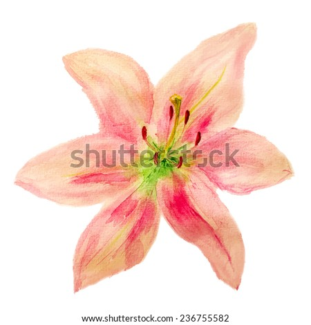 Flower of pink lily isolated on white background. Vector eps8 - stock vector