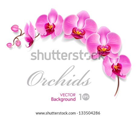 Flower orchid. Vector eps 10. - stock vector