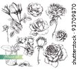 Flower set: highly detailed hand drawn roses. - stock photo