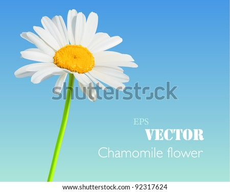 Flower vector nature background. Chamomile bloom - stock vector