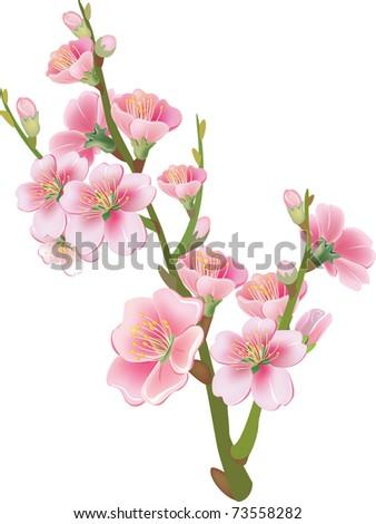 Flowering branch - stock vector
