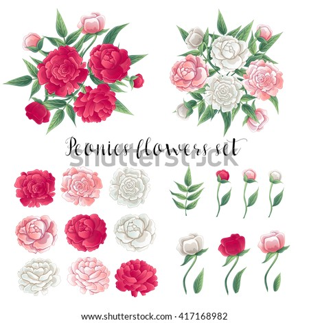 Flowers and Leaves. Pink and White Peonies. Floral Set. Vector illustration - stock vector