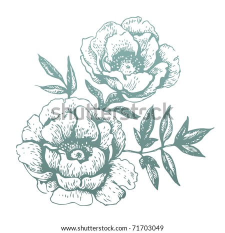 Flowers. Hand-drawn illustrations - stock vector
