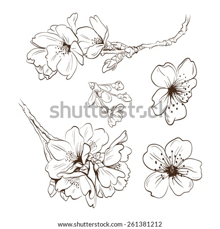 Flowers hand drawn, vector illustration - stock vector