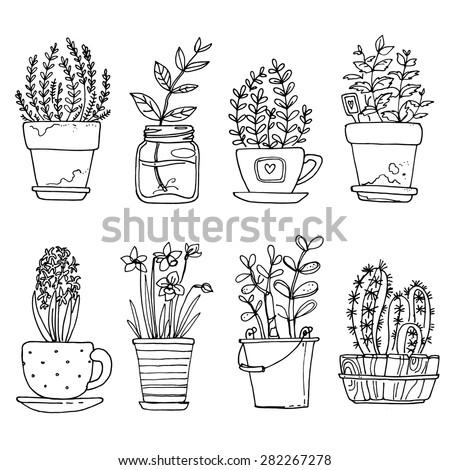 Картинки кактусы