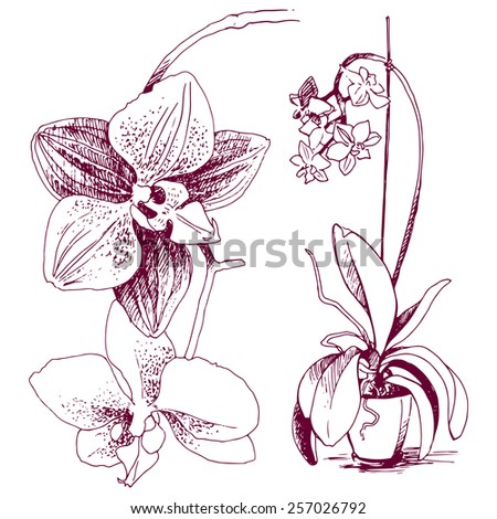 Flowers, orchid drawn in sketch style. - stock vector