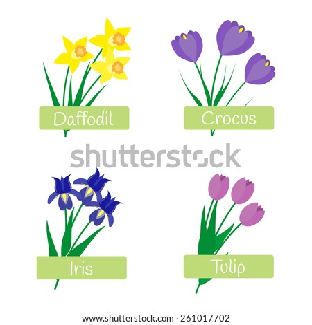 Flowers set. Daffodil, crocus, iris, tulip. - stock vector