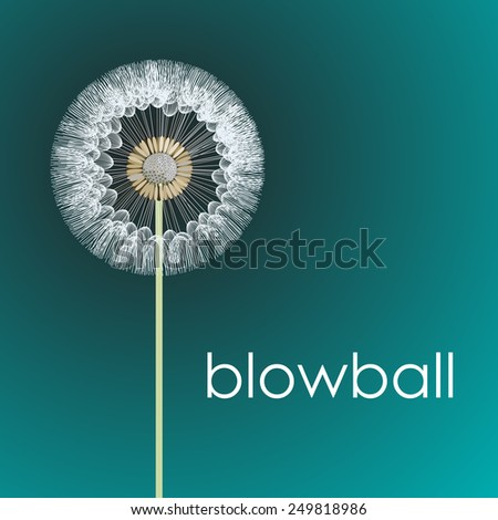 fluffy blowball head on the stem. vector illustration - stock vector
