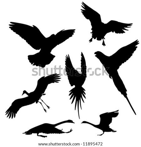 flying bird  (dove,goose,stork ,parrot and swan) vector silhouettes collection