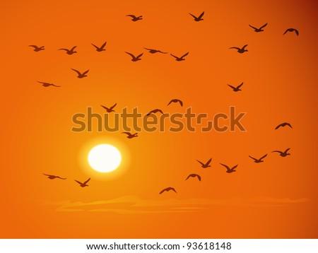 Flying birds against orange sunset. - stock vector