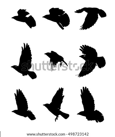 Sparrow Silhouette Flying Sparrow Flying ...