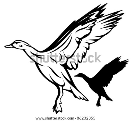 flying duck vector illustration - black and white outline and silhouette - stock vector