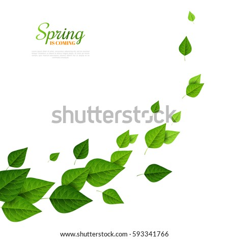 Flying green leaves on white background. Fresh spring foliage. Vector illustration. Spring is coming concept, environment and ecology backdrop