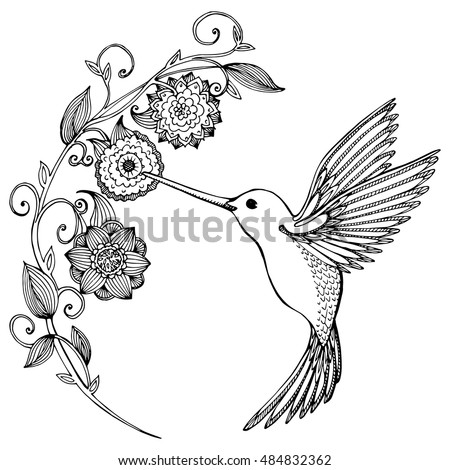 hummingbird stock images  royalty