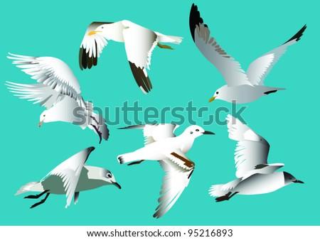 Flying seagulls - stock vector