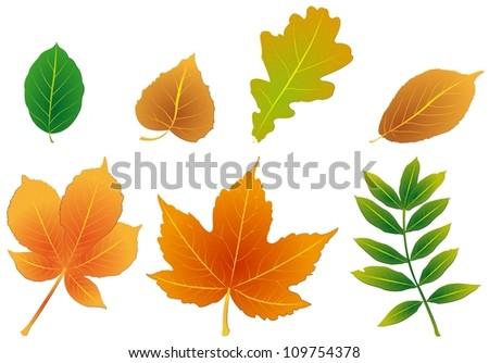 stock-vector-foliage-109754378.jpg