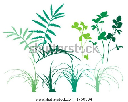 Foliage Patterns Plants Grass Leaves Vector Stock Vector 1760384 ...