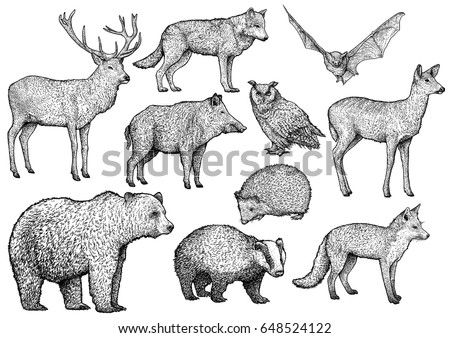 wolf silhouette stock images royaltyfree images