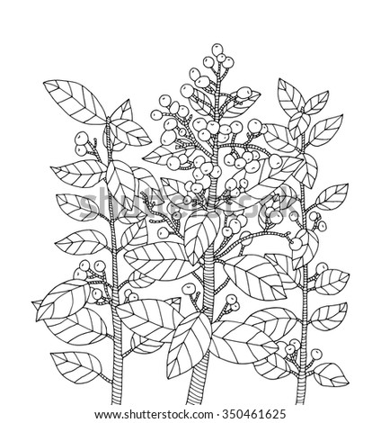 Forest Bush Branch With Leaves Wild Berries Vector Hand Drawn Artwork Zentangle