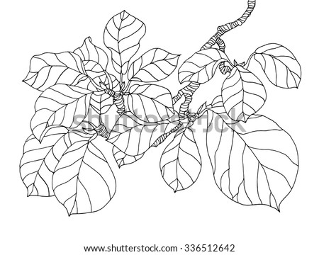 Forest magnolia tree branch leaves. Vector engrave. Coloring book page for adult. Hand drawn artwork. Love bohemia concept for invitation, card, ticket, branding, boutique logo, label. Black and white - stock vector