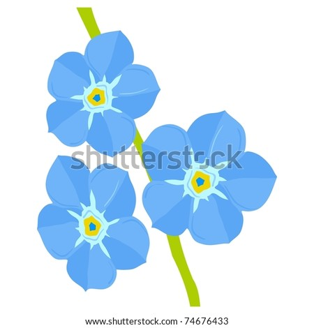 Forget-me-not flower. Vector - stock vector