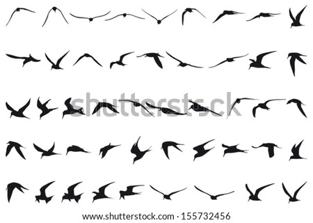 Forty-seven Little Terns flying black silhouettes - stock vector
