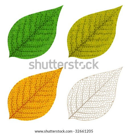 Four autumn mosaic leaves isolated on white background