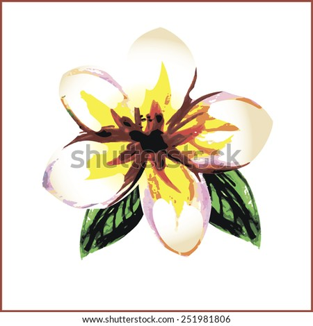 Frangipani or plumeria painted watercolor style isolated on white background - stock vector