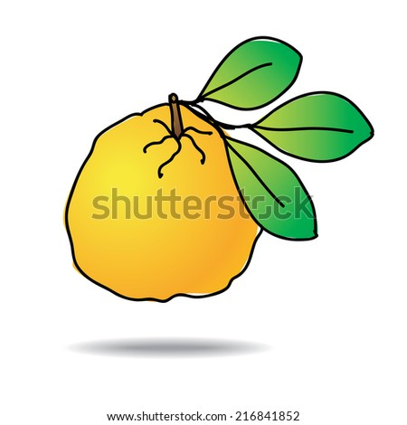 Freehand drawing ugli fruit icon - vector eps 10 illustration - stock vector