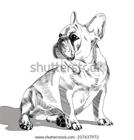 Simple french bulldog drawing