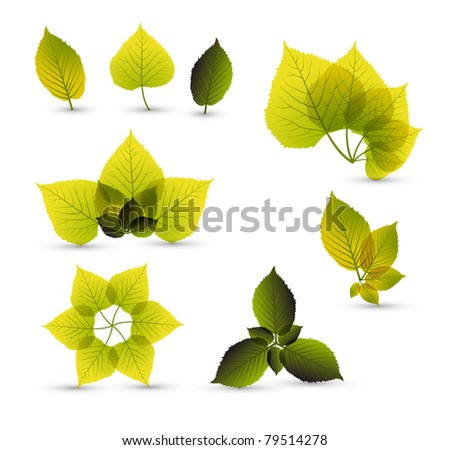 Fresh abstract leaf elements with nice details - stock vector