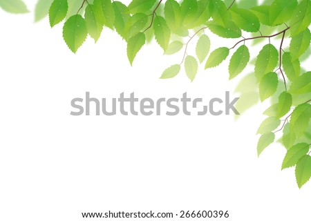 Fresh green beech leaves on white background - stock vector
