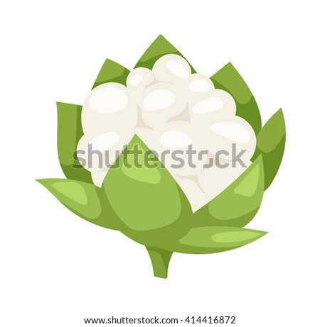 Fresh green broccoli isolated on white background vegetarian, raw, healthy food vector. Broccoli vegetarian raw and healthy organic broccoli. Broccoli freshness diet eating ingredient. - stock vector