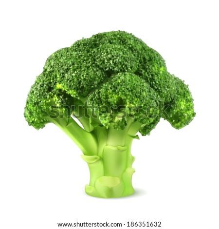 Fresh green broccoli, vector illustration - stock vector