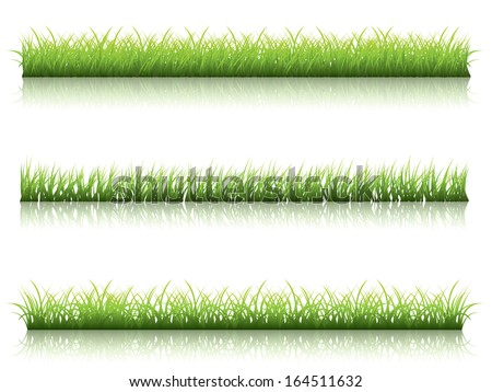 Fresh green grass line with reflection on white background. - stock vector