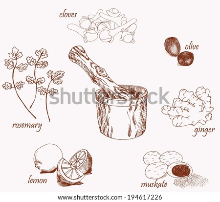 Fresh herbs and spices with wooden mortar isolated on white background - stock vector