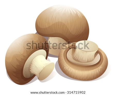 Fresh mushroom in three pieces	 illustration - stock vector