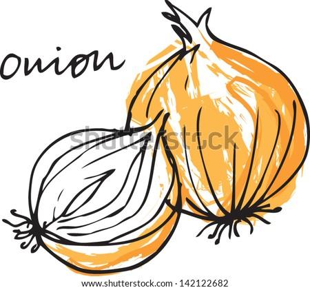 Fresh onion whole & sliced vector illustration - stock vector