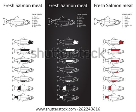 Fresh salmon meat diagram in three versions - stock vector