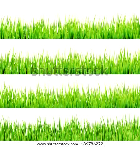 Fresh spring green grass Isolated On White. And also includes EPS 10 vector - stock vector