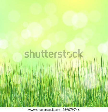 Fresh spring green grass on sky background. Beauty natural background  - stock vector